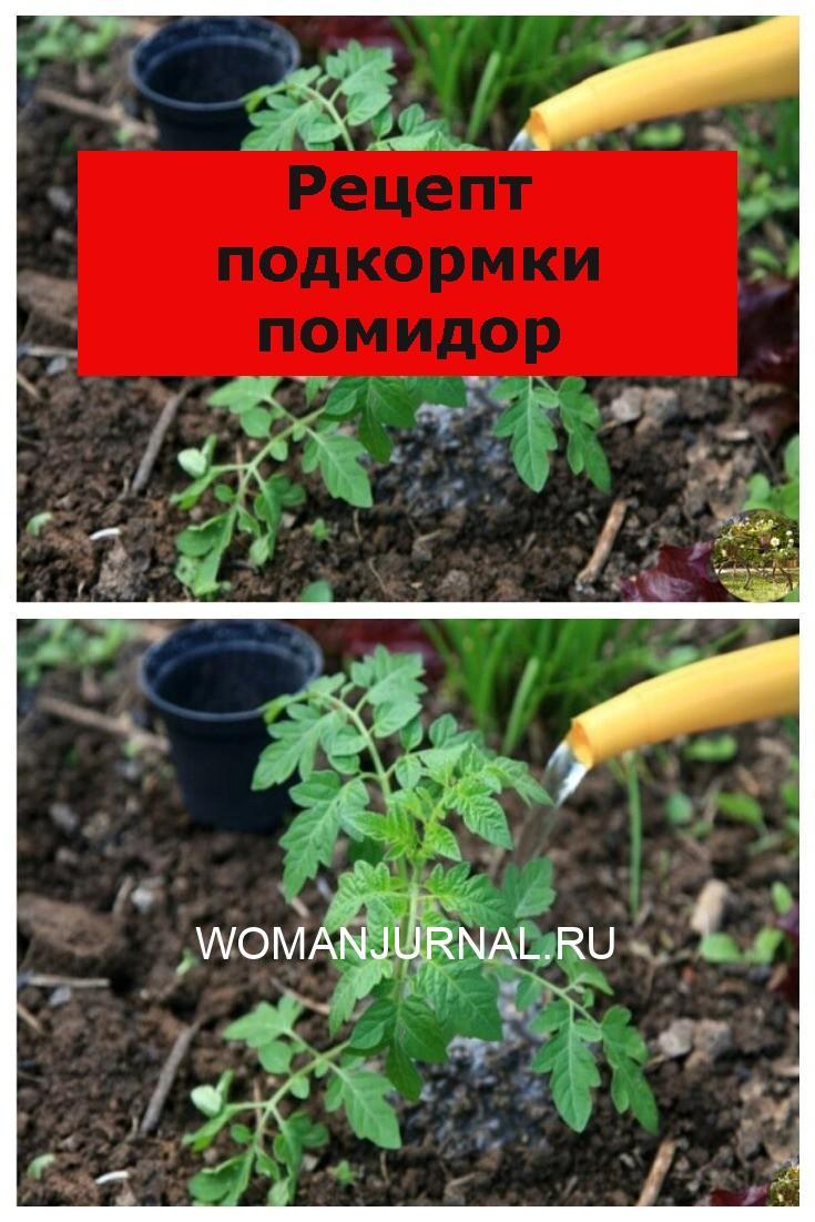 Рецепт подкормки помидор