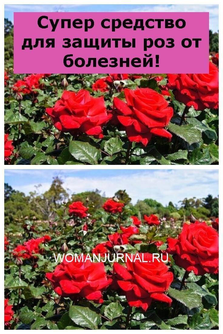 Супер средство для защиты роз от болезней!