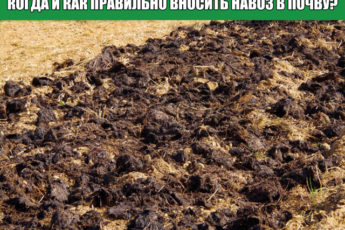Когда и как правильно вносить навоз в почву?