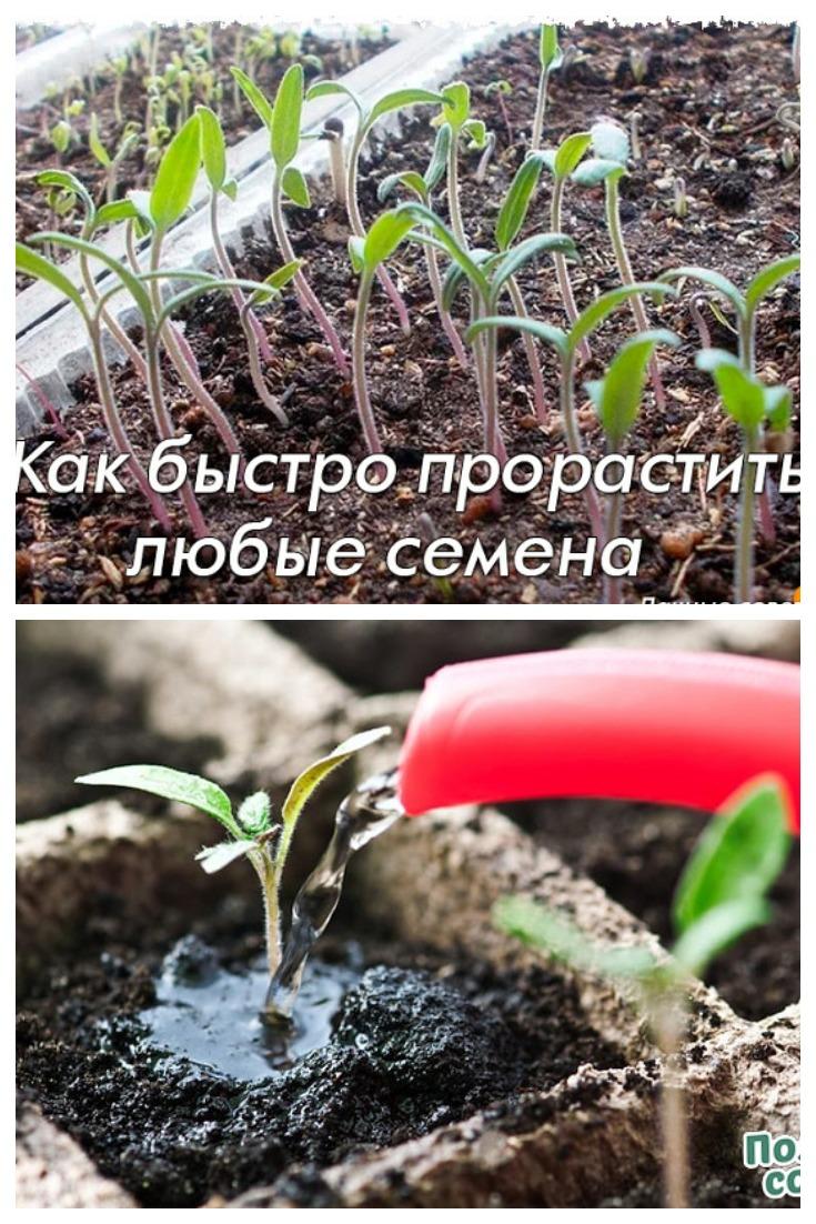 Как быстро прорастить любые семена