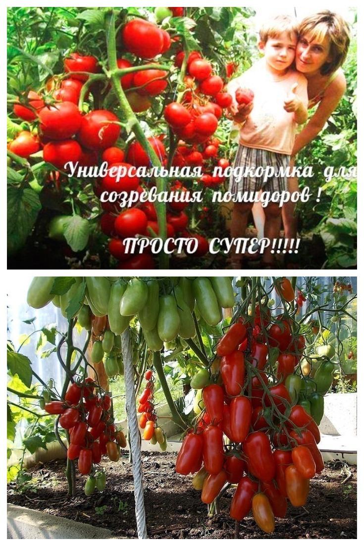 Уникальная подкормка для созревания помидоров