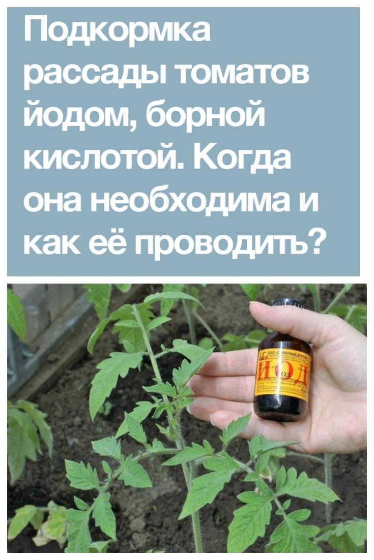 Когда необходима подкормка томатов йодом