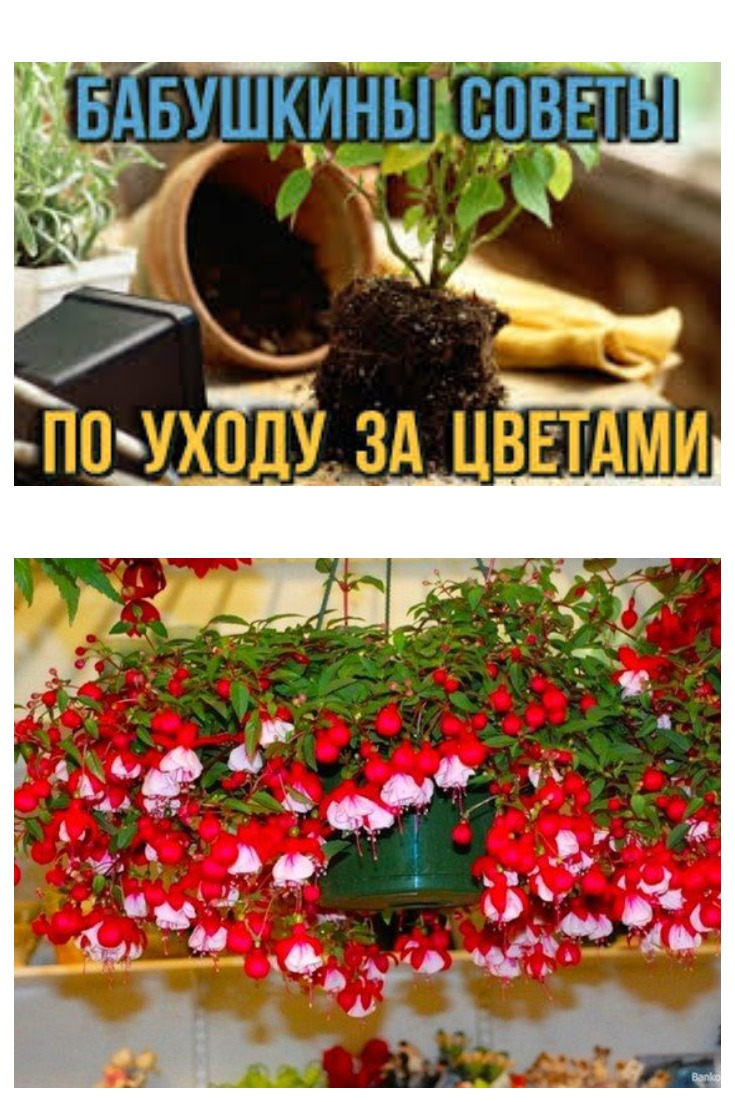5 бабушкиных советов для цветов