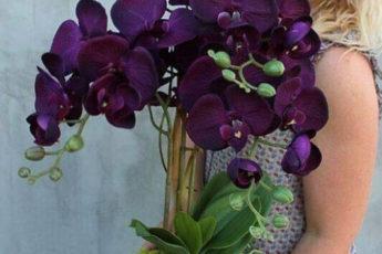 9 правил, благодаря которым орхидея будет буйно цвести круглый год.