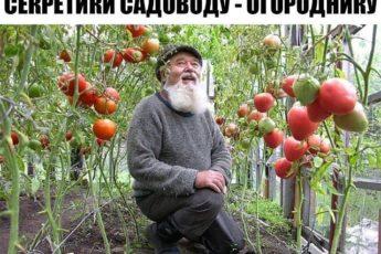 МАЛЕНЬКИЕ СЕКРЕТИКИ САДОВОДУ - ОГОРОДНИКУ