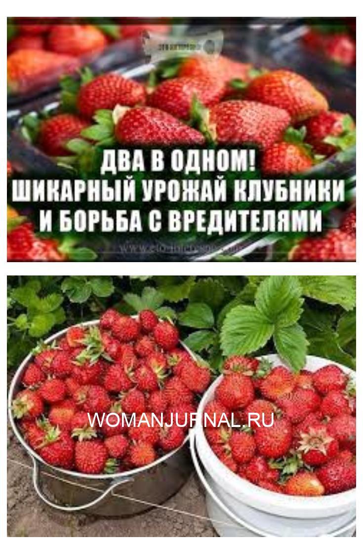 Моя подруга жалуется, что не успевает собирать ягоды - их так много. Утверждает, что секрет в этой подкормке.