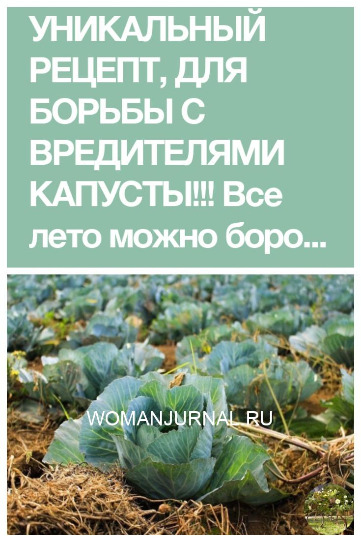Действующий рецепт для борьбы с вредителями капусты