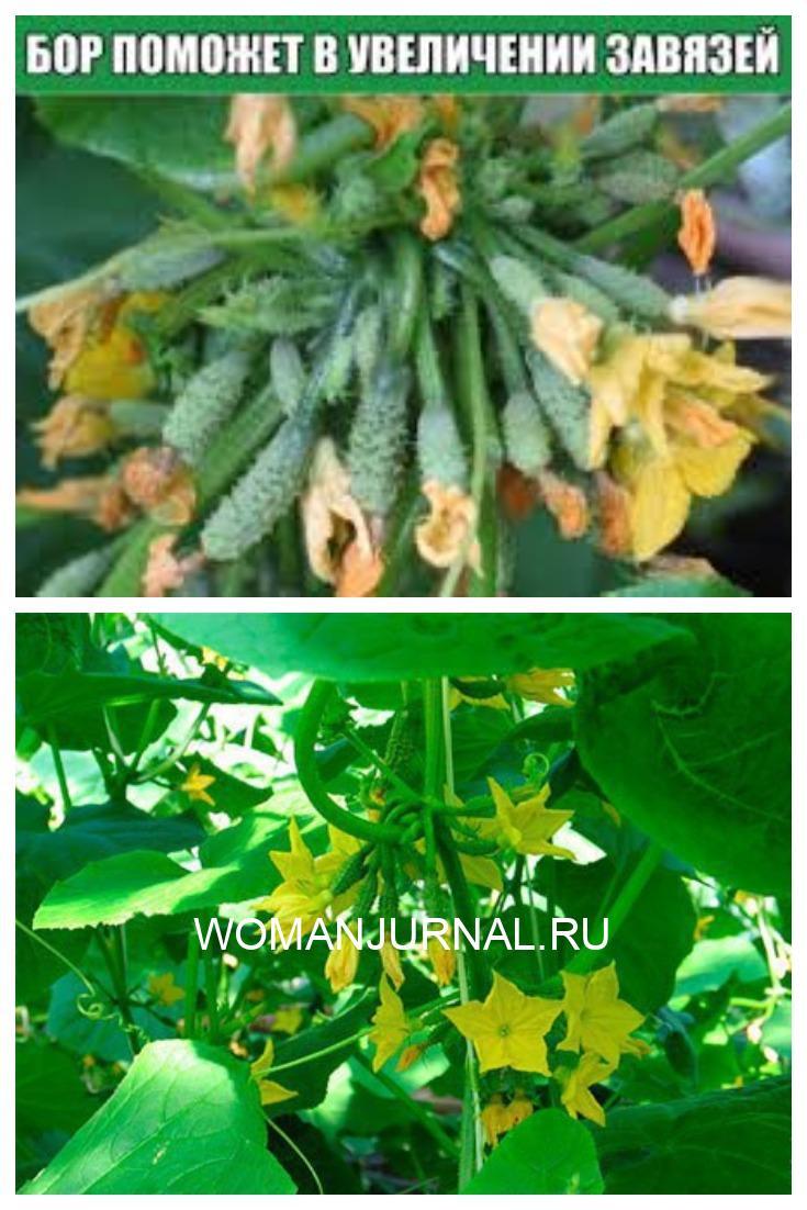 Бор поможет в увеличении урожайности!