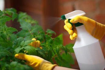 Аптечные средства от болезней и вредителей растений