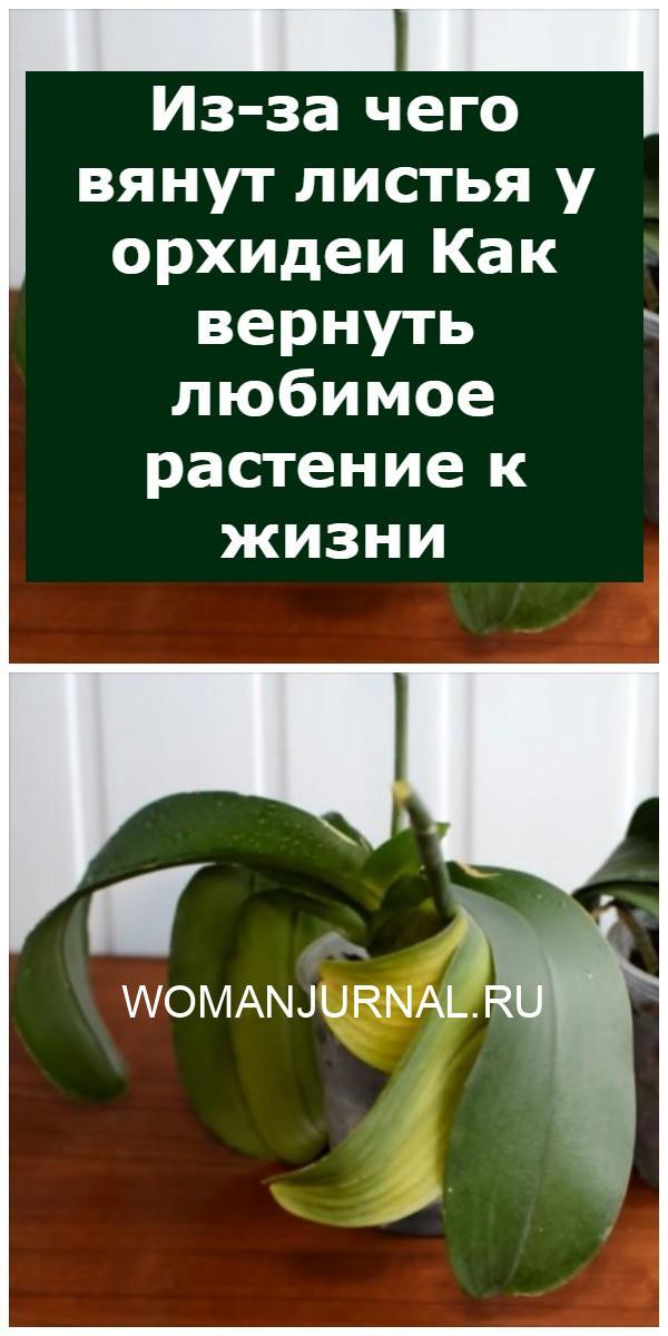 Из-за чего вянут листья у орхидеи Как вернуть любимое растение к жизни