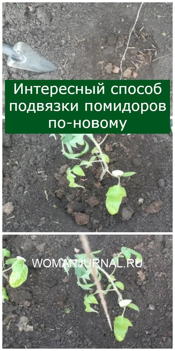 Интересный способ подвязки помидоров по-новому