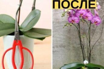 Любимая орхидея будет цвести целый год! Главное соблюдать 7 важных советов