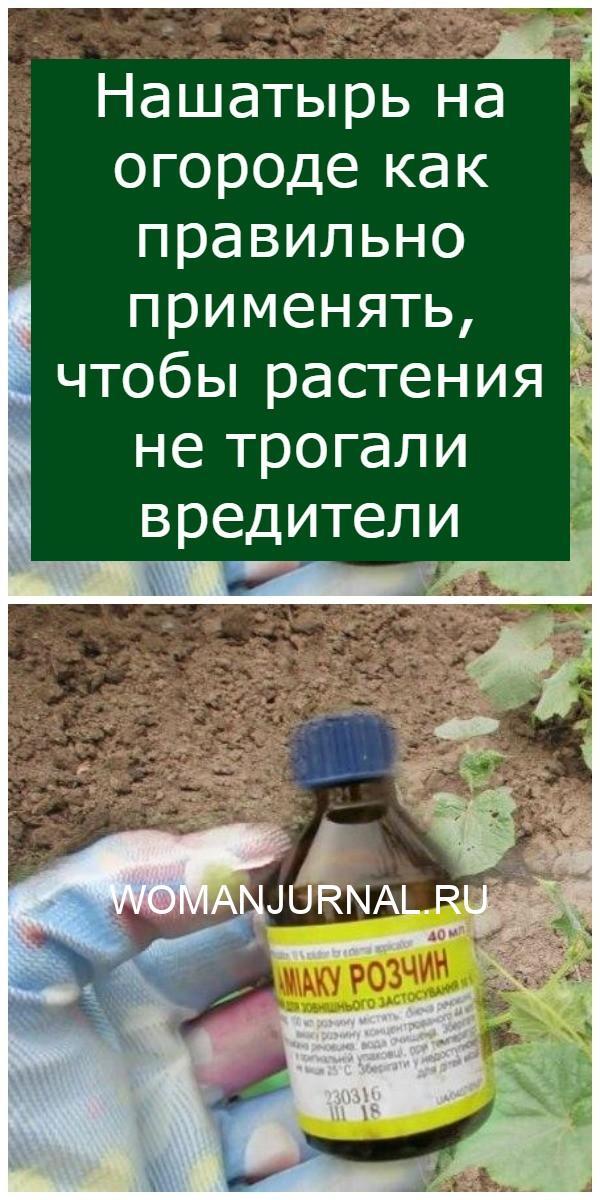 Нашатырь на огороде как правильно применять, чтобы растения не трогали вредители