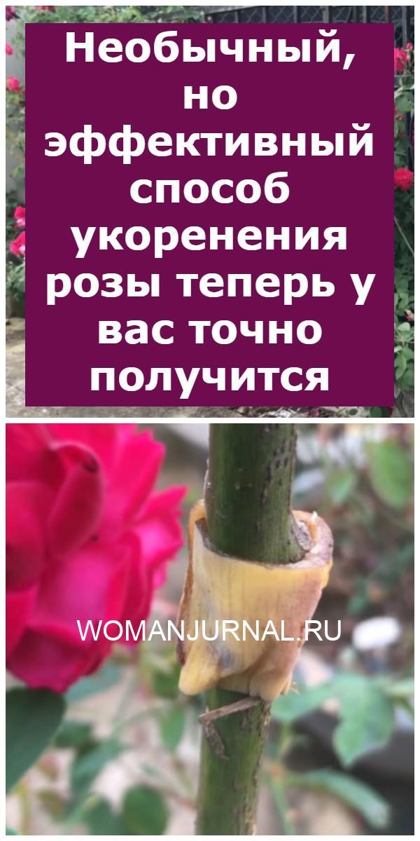 Необычный, но эффективный способ укоренения розы теперь у вас точно получится