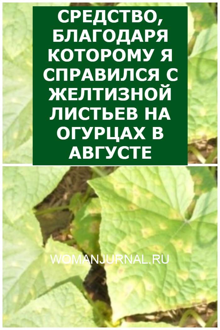 Средство, благодаря которому я справился с желтизной листьев на огурцах в августе