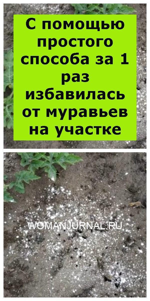 С помощью простого способа за 1 раз избавилась от муравьев на участке