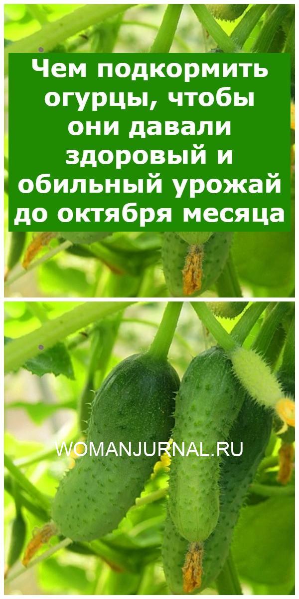 Чем подкормить огурцы, чтобы они давали здоровый и обильный урожай до октября месяца