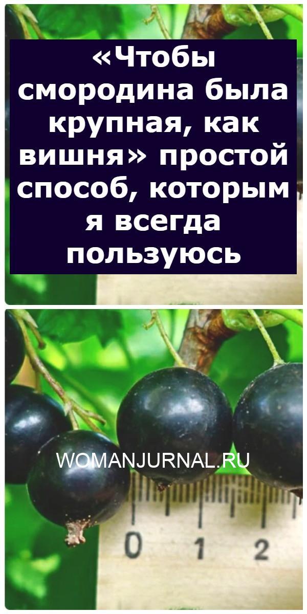 «Чтобы смородина была крупная, как вишня» простой способ, которым я всегда пользуюсь