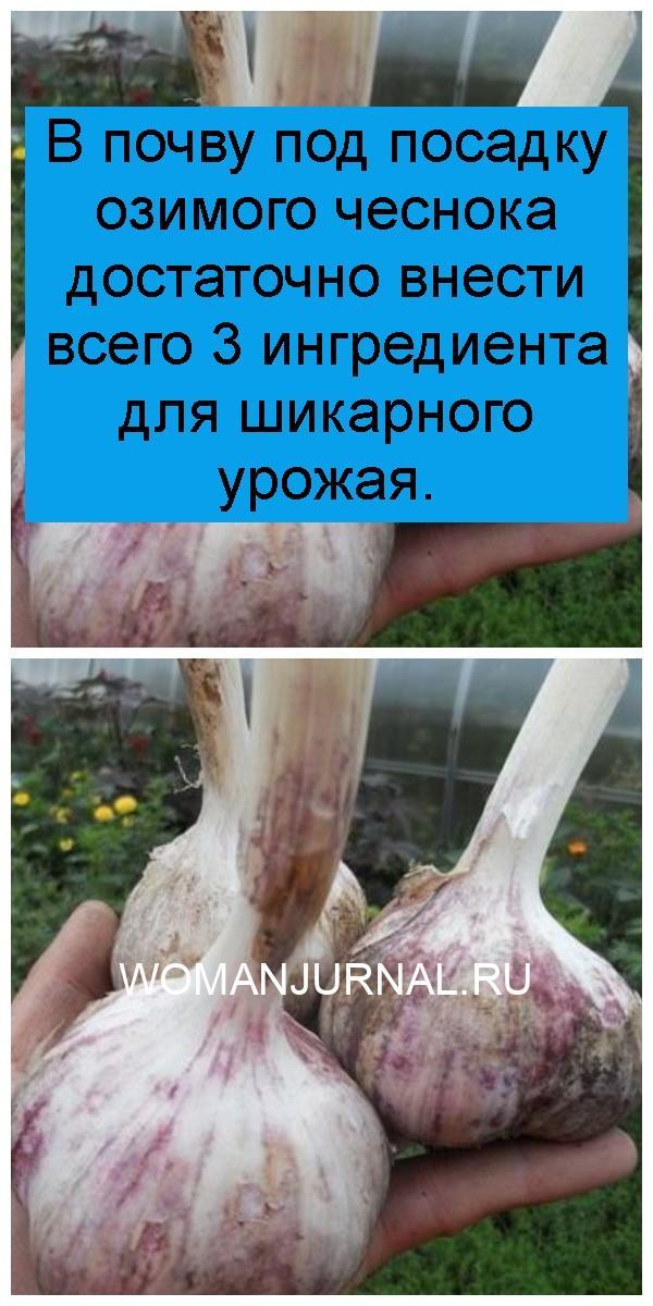 В почву под посадку озимого чеснока достаточно внести всего 3 ингредиента для шикарного урожая 4