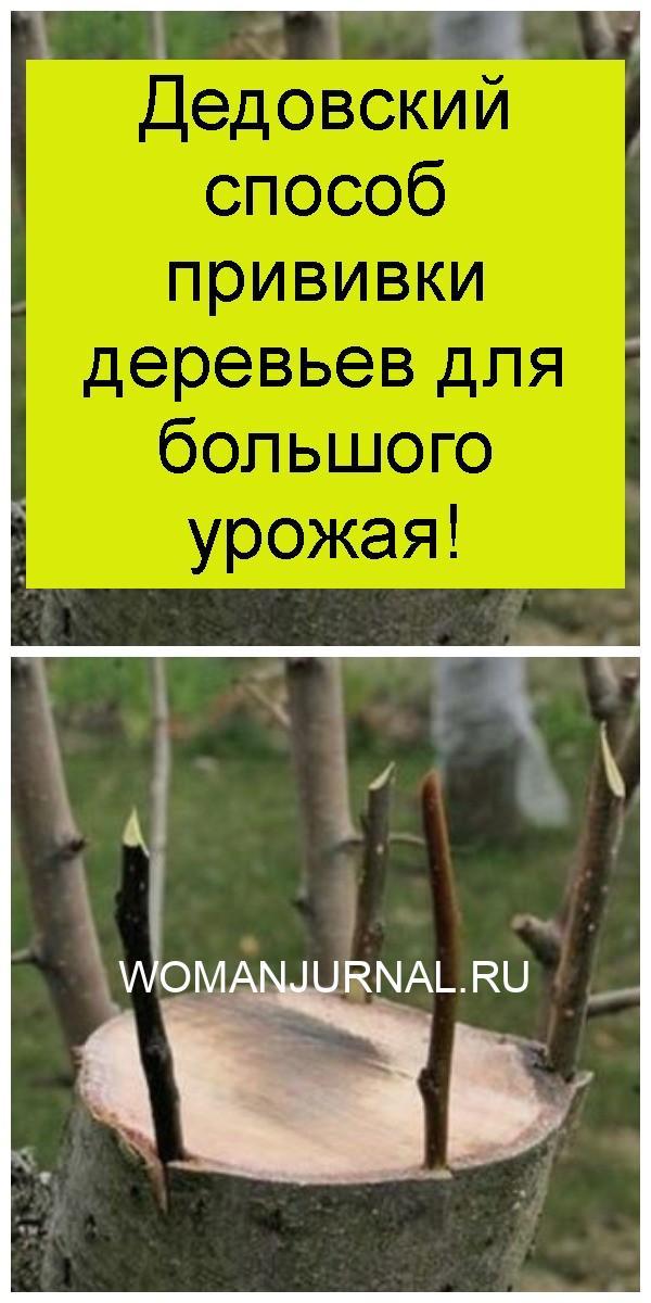 Дедовский способ прививки деревьев для большого урожая 4
