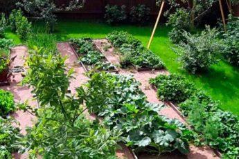 Десять копеечных аптечных средств, которые творят чудеса в огороде и цветнике 1