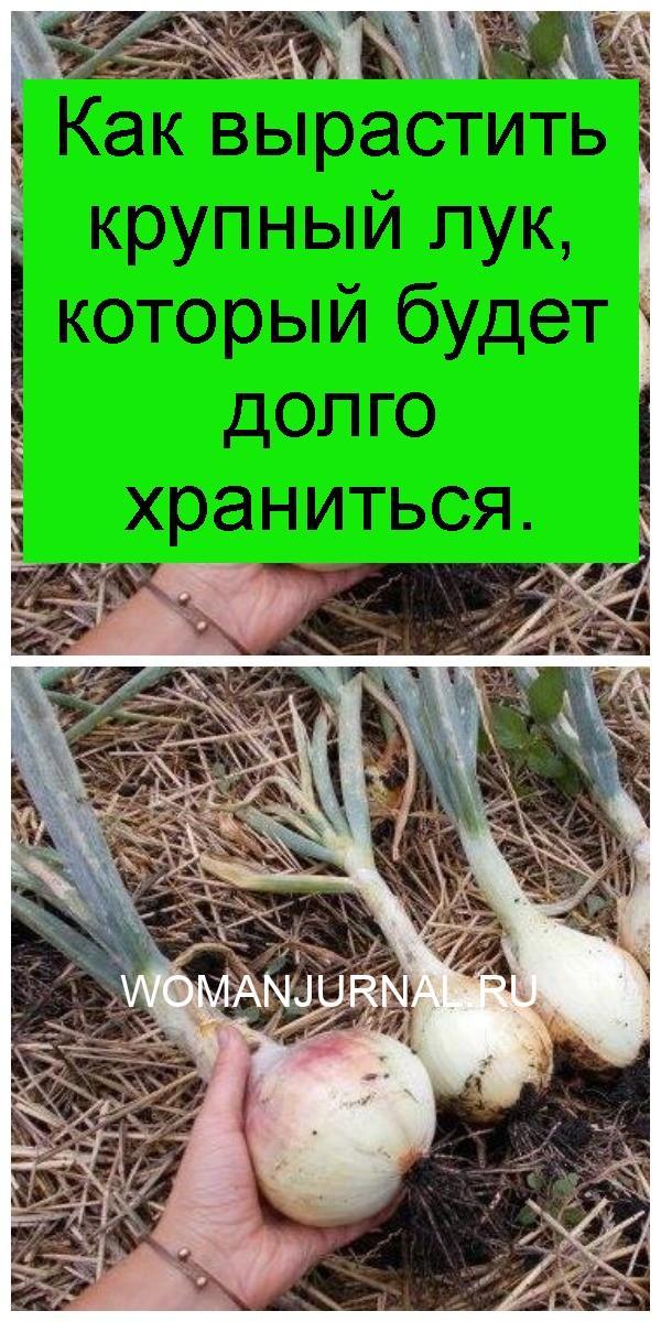 Как вырастить крупный лук, который будет долго храниться 4