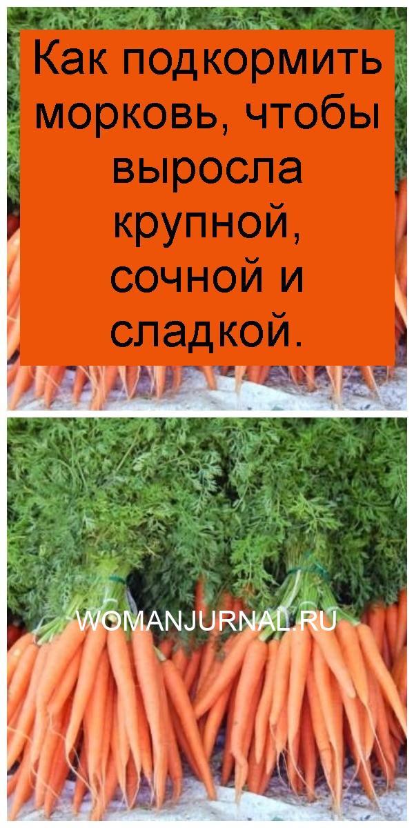 Как подкормить морковь, чтобы выросла крупной, сочной и сладкой 4