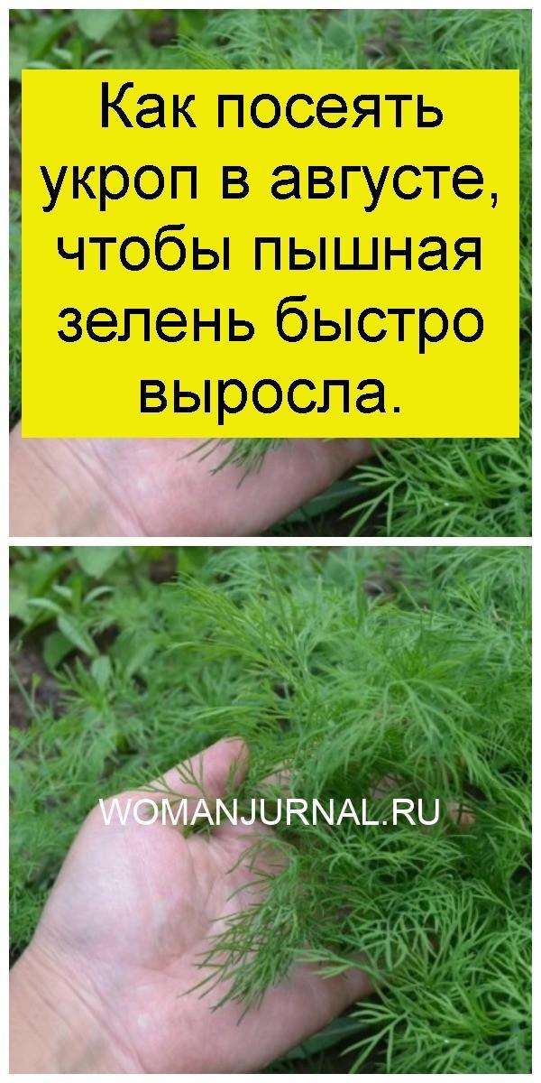 Как посеять укроп в августе, чтобы пышная зелень быстро выросла 4