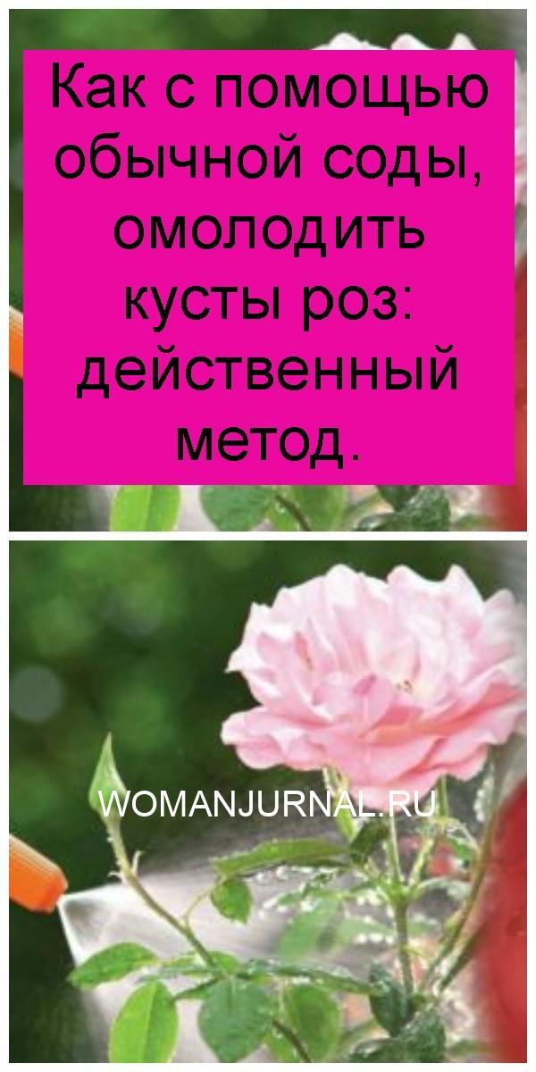 Как с помощью обычной соды, омолодить кусты роз: действенный метод 4