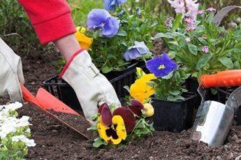 Народные приметы для садоводов-огородников. Когда нельзя сажать и сеять 1