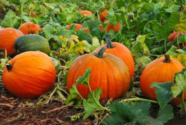 Народные приметы для садоводов-огородников. Когда нельзя сажать и сеять 6