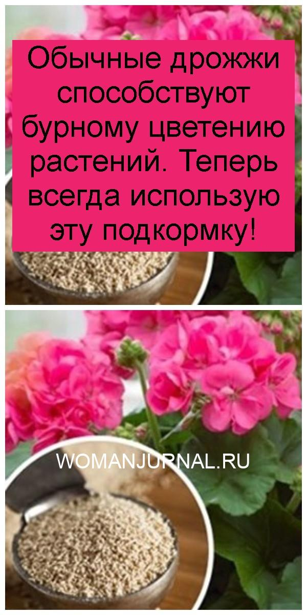 Обычные дрожжи способствуют бурному цветению растений. Теперь всегда использую эту подкормку 4