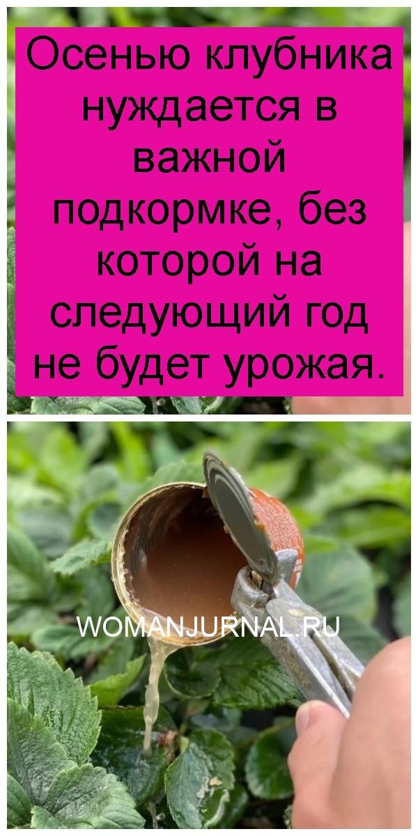 Осенью клубника нуждается в важной подкормке, без которой на следующий год не будет урожая 4