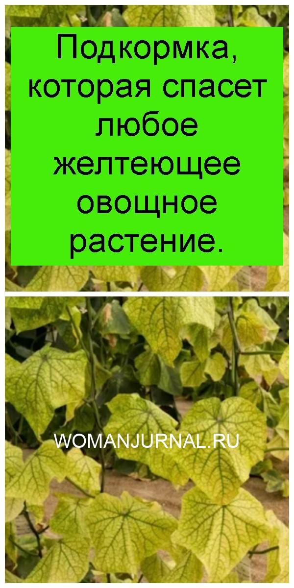 Подкормка, которая спасет любое желтеющее овощное растение 4