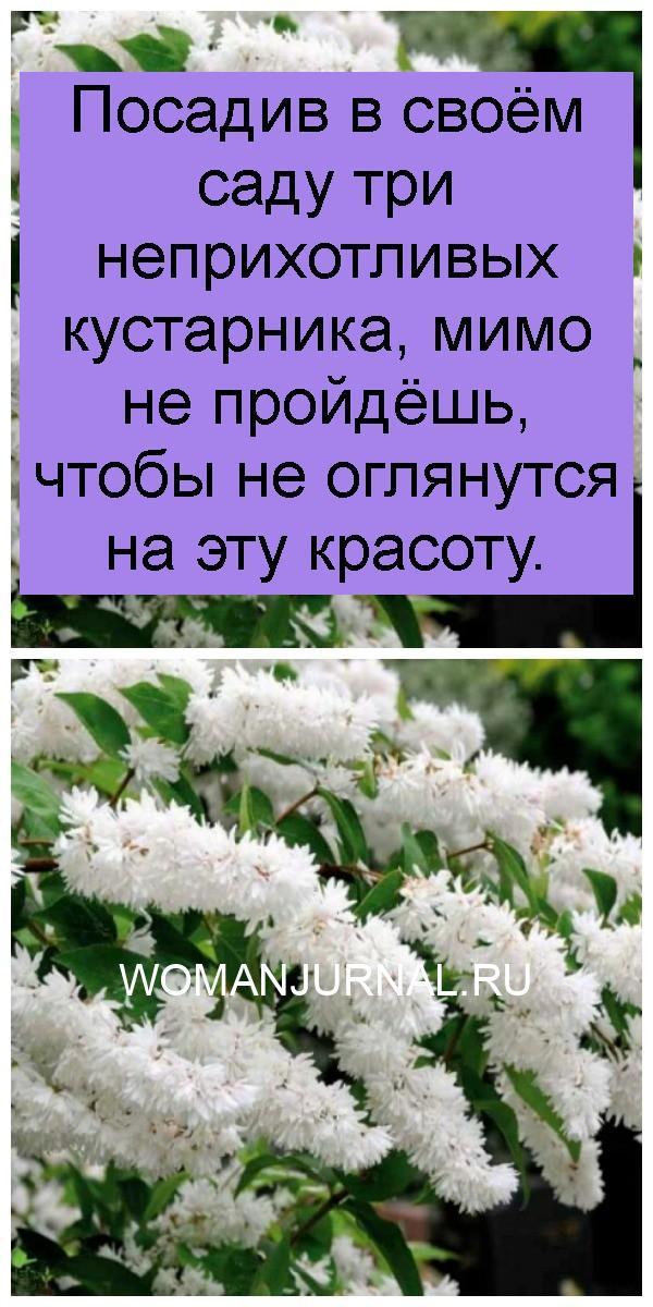 Посадив в своём саду три неприхотливых кустарника, мимо не пройдёшь, чтобы не оглянутся на эту красоту 4