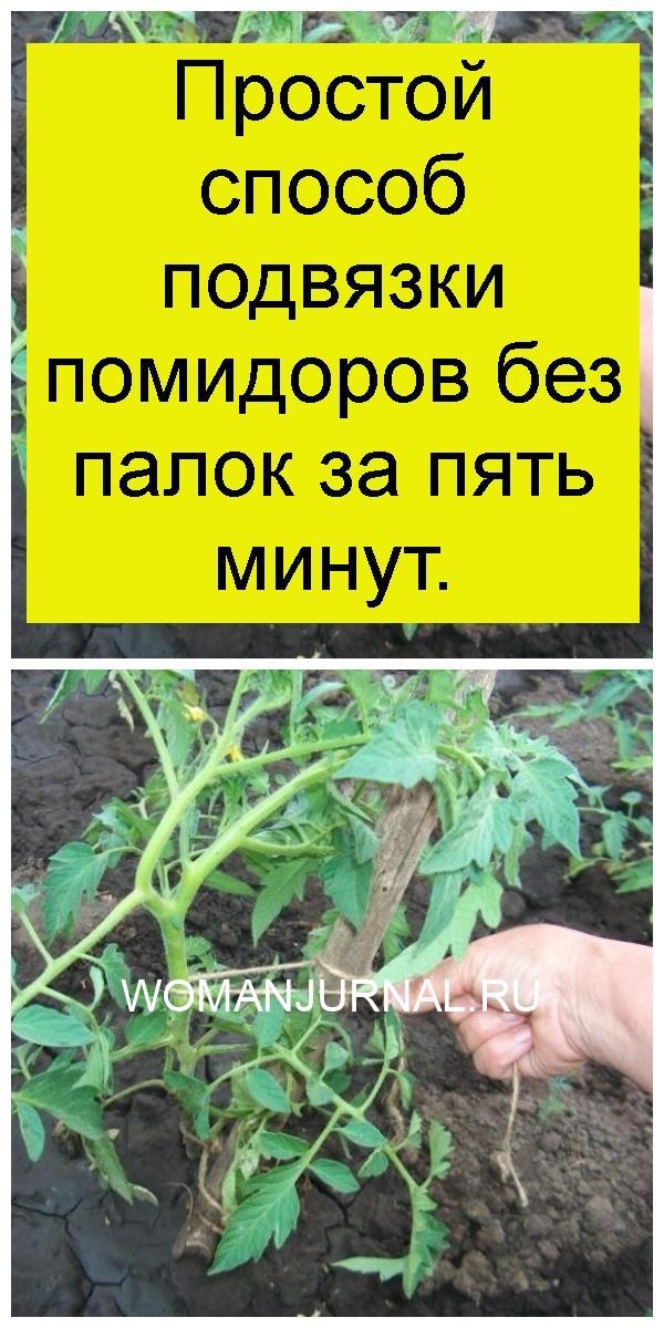 Простой способ подвязки помидоров без палок за пять минут 4