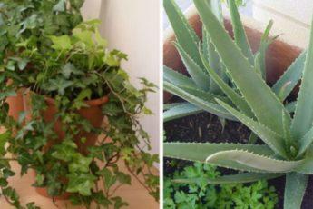 Пять комнатных растений для спальни, которые обеспечат здоровый и полноценный сон 1