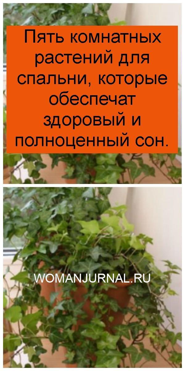 Пять комнатных растений для спальни, которые обеспечат здоровый и полноценный сон 4