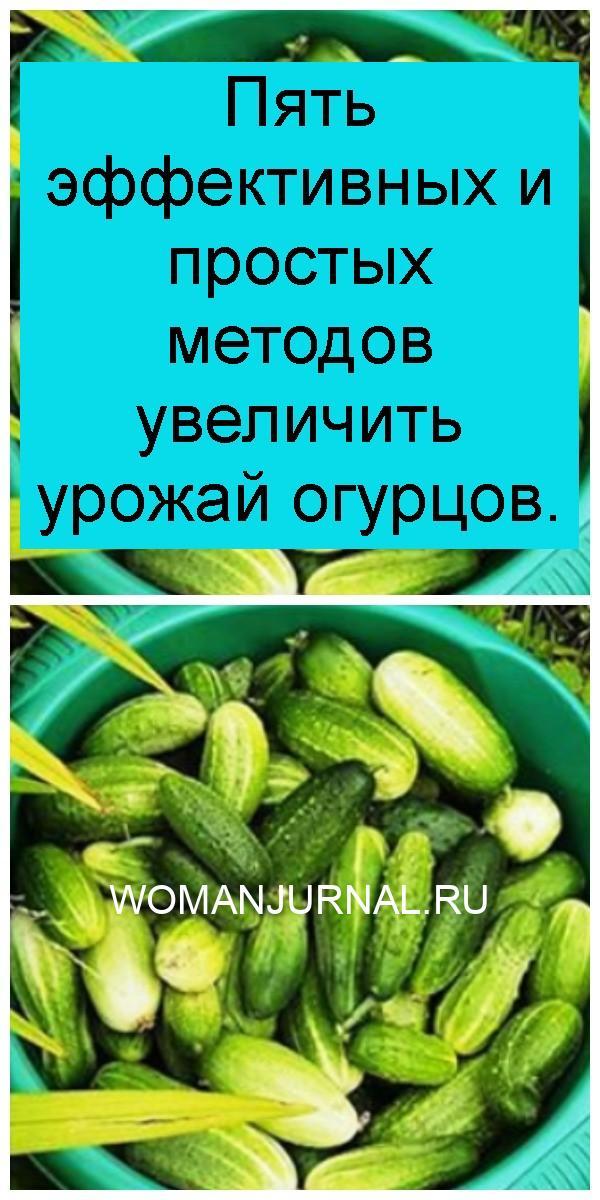 Пять эффективных и простых методов увеличить урожай огурцов 4