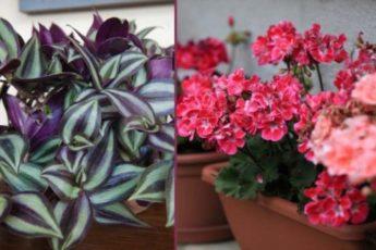 Растения, которые защищают от порчи и сглаза 1