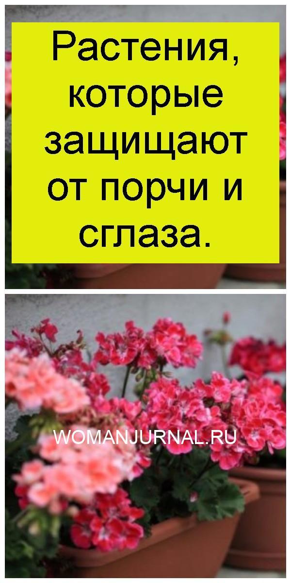 Растения, которые защищают от порчи и сглаза 4