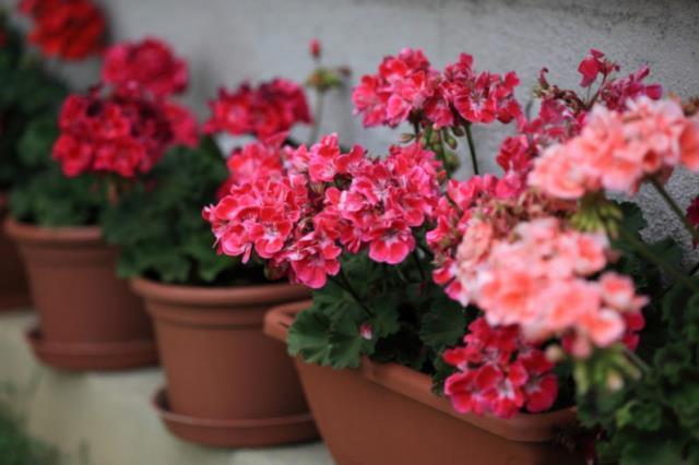Растения, которые защищают от порчи и сглаза 7