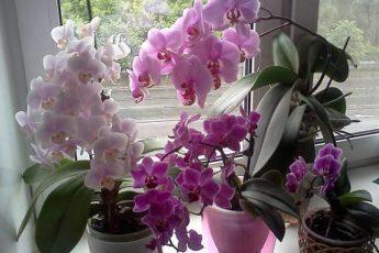 Семь важных секретов для ухода за орхидеями. И ваша орхидея будет цвести круглый год 1