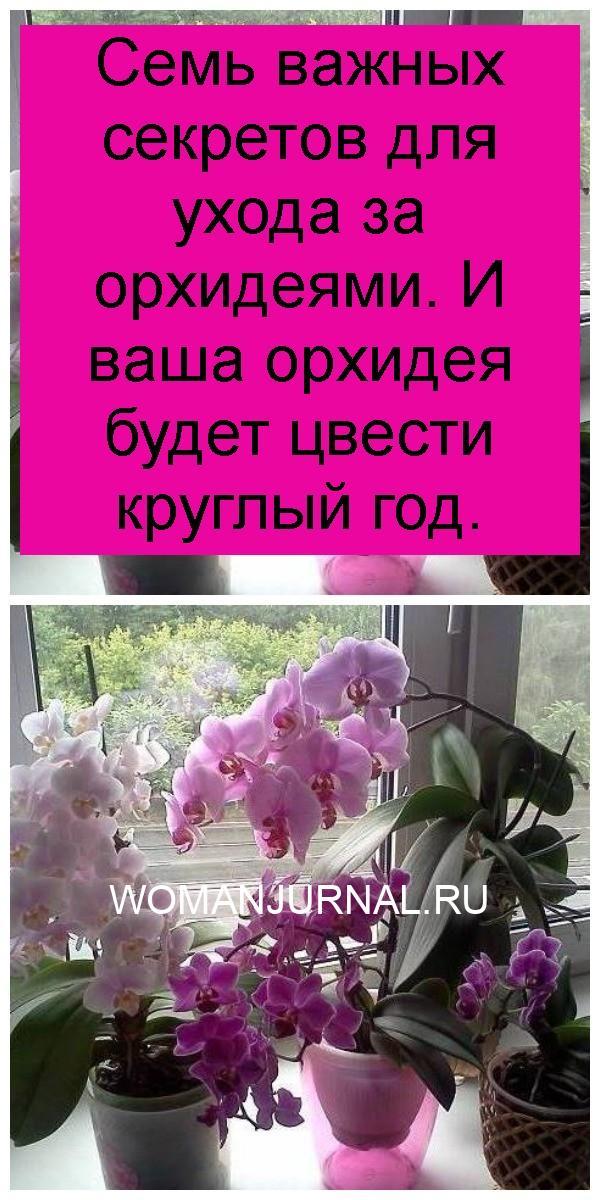 Семь важных секретов для ухода за орхидеями. И ваша орхидея будет цвести круглый год 4