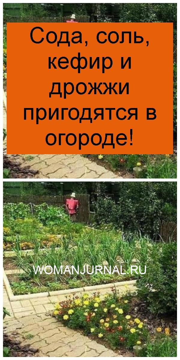 Сода, соль, кефир и дрожжи пригодятся в огороде 4