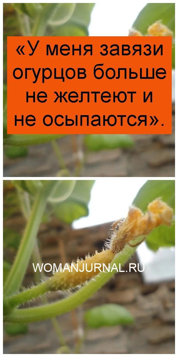 «У меня завязи огурцов больше не желтеют и не осыпаются» 4