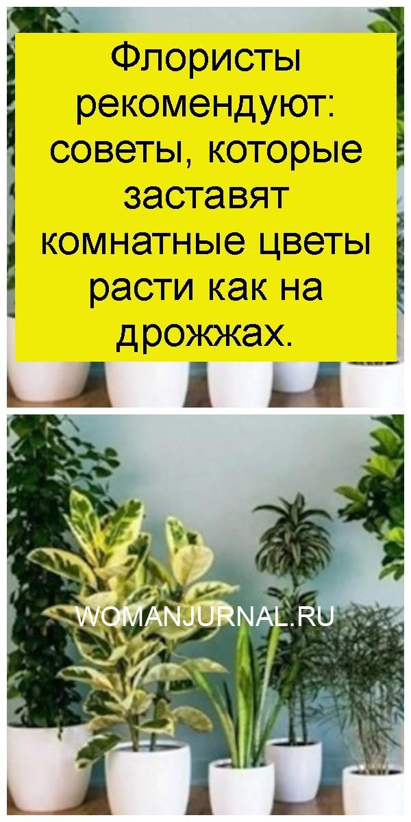 Флористы рекомендуют: советы, которые заставят комнатные цветы расти как на дрожжах 4