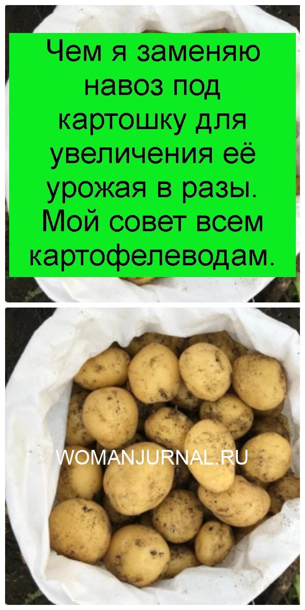 Чем я заменяю навоз под картошку для увеличения её урожая в разы. Мой совет всем картофелеводам 4