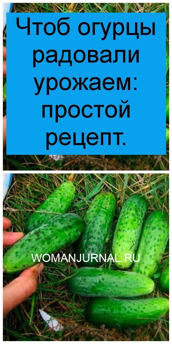 Чтоб огурцы радовали урожаем: простой рецепт 4
