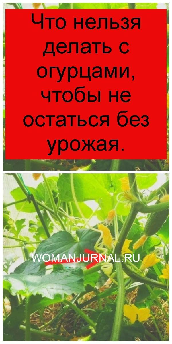 Что нельзя делать с огурцами, чтобы не остаться без урожая 4